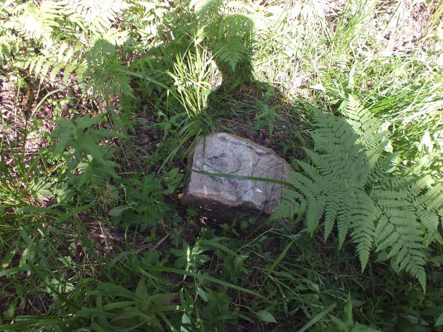 16 камни в лесу