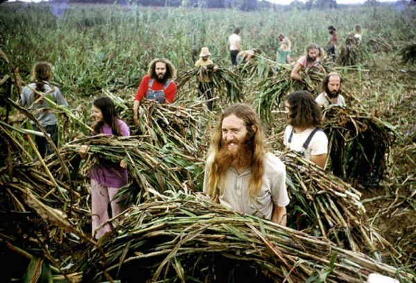 hippie-commune-harvest