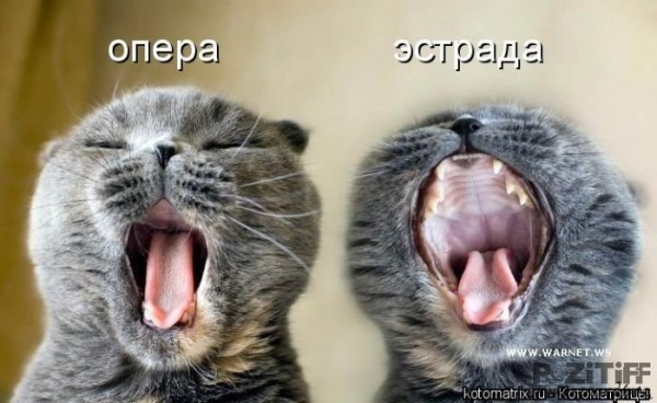 орущая кошка