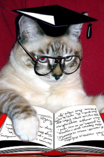 мудрый кот. jpg