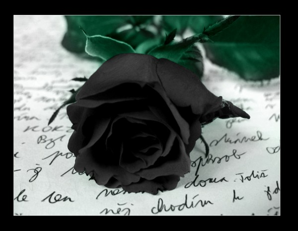 Black_Rose_by