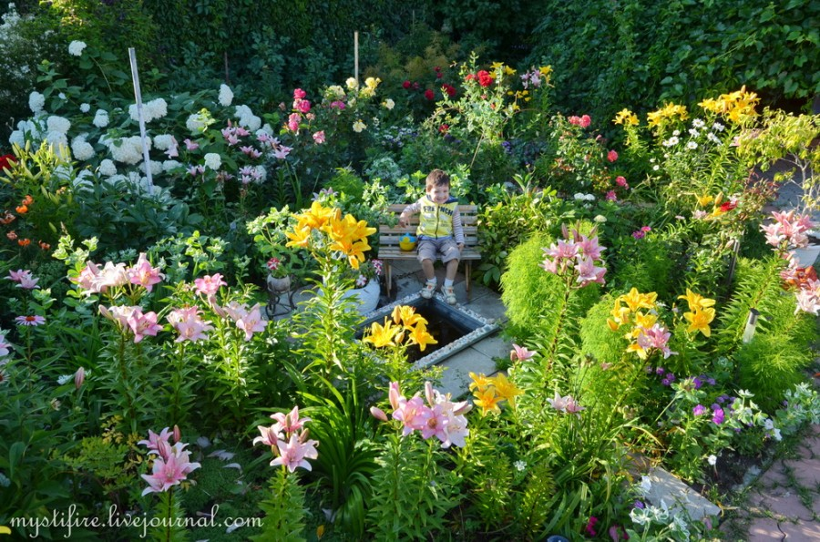 mystifire mankai сад цветы