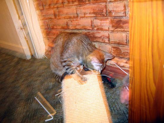 http://pics.livejournal.com/mzk/pic/008e40w3