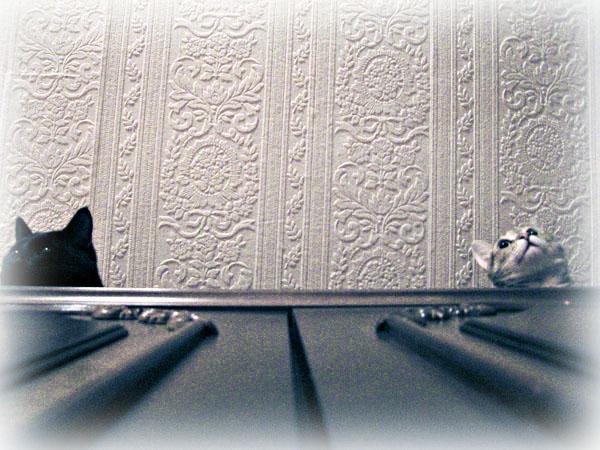 http://pics.livejournal.com/mzk/pic/009y3c98