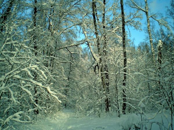 Сегодня в лесу
