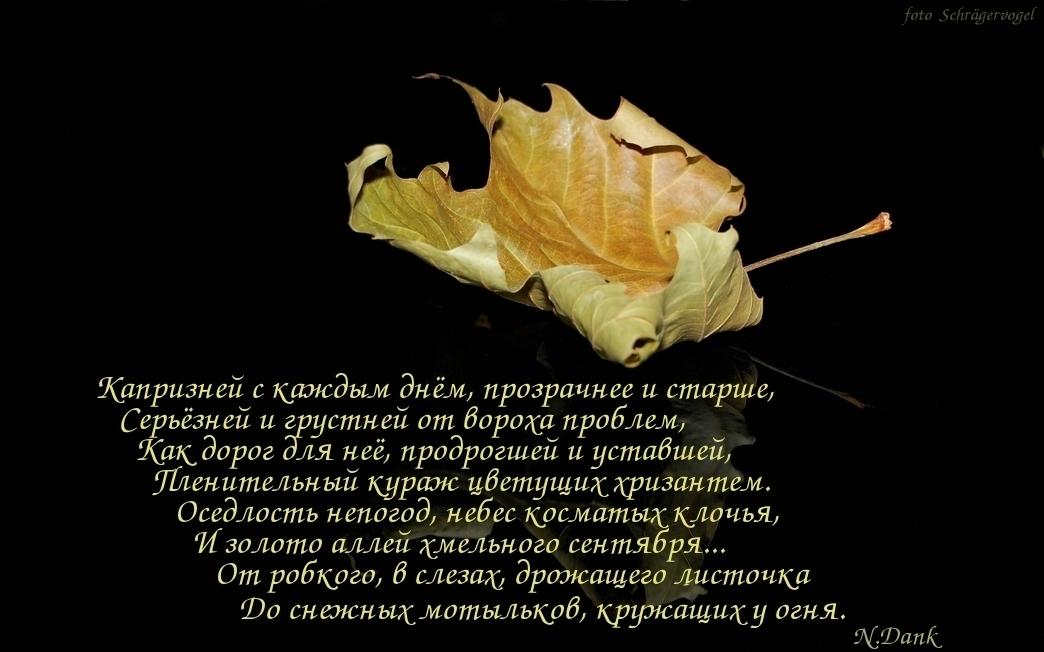 Стихи об осени. Осеннее настроение.  фото Schrägervogel