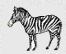 зебра стихи для детей загадки