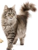 кошка стихи о кошках стихи о лете cat png