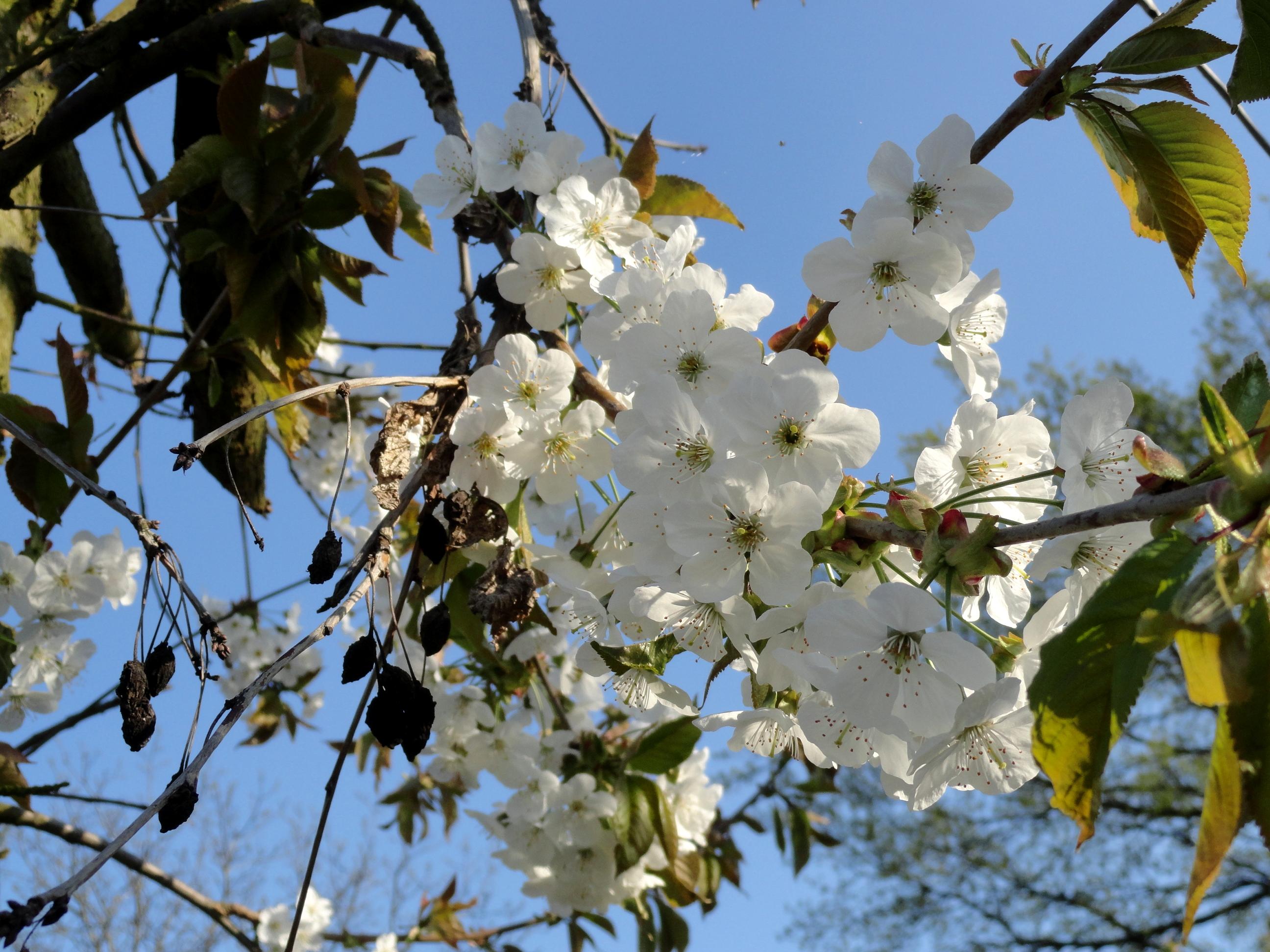 цветение весна