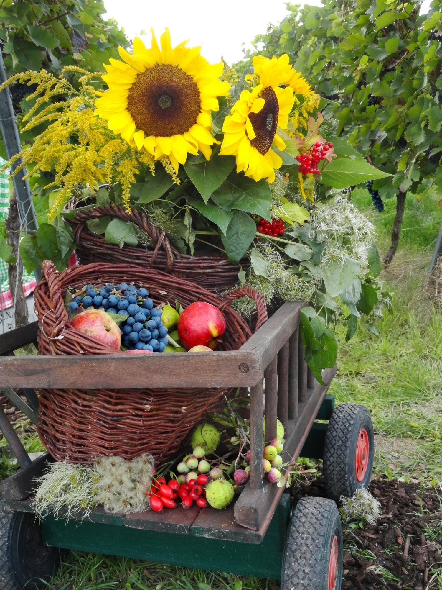 виноград осень натюрморт с подсолнухами
