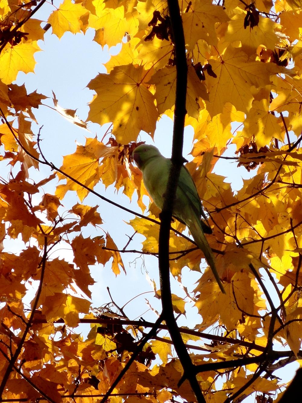 стихи об осени попугаи на Рейне