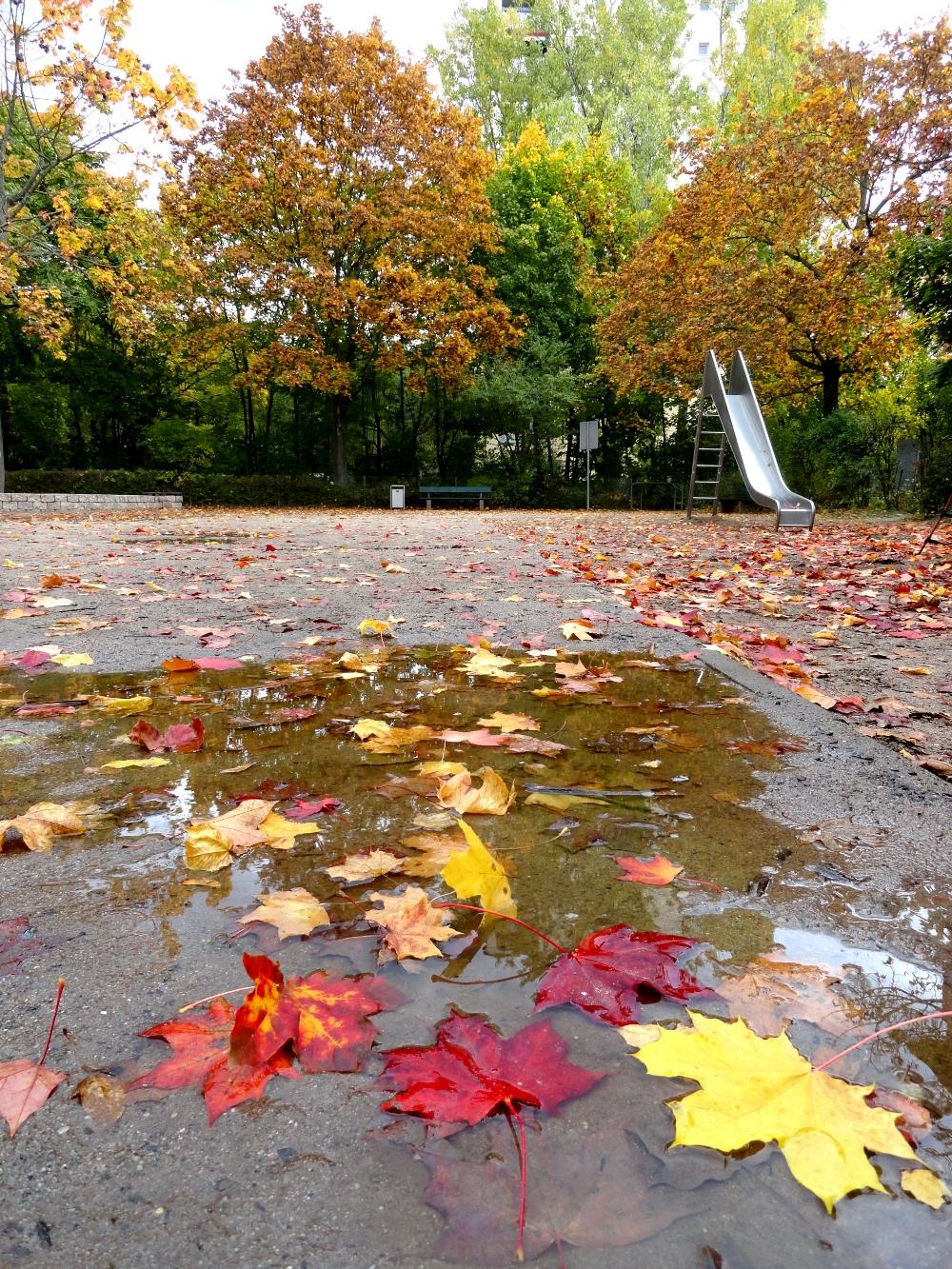 лужа осень