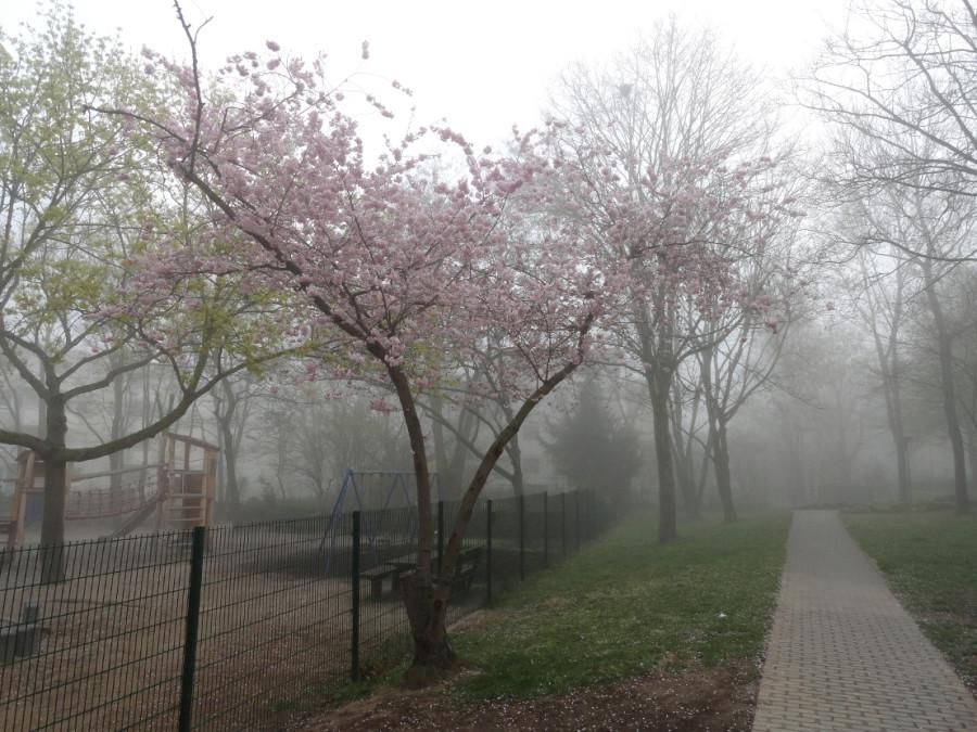 весна туман город