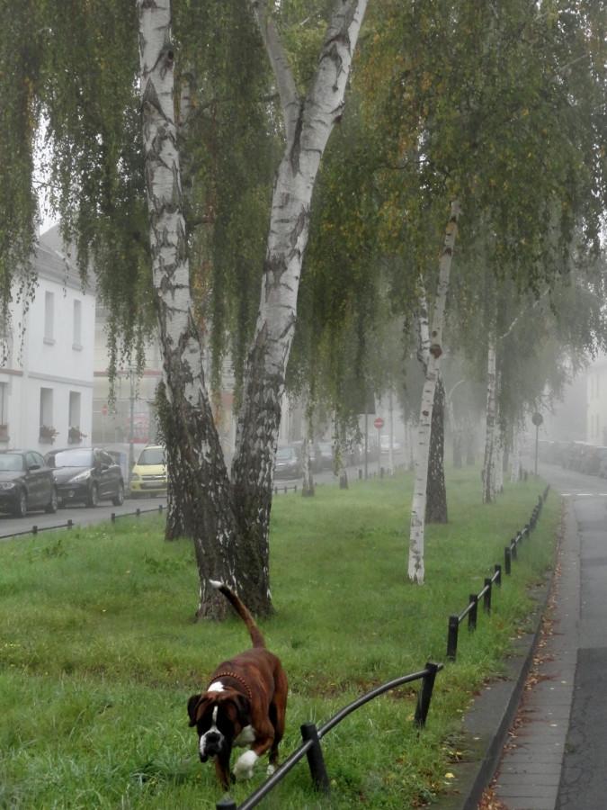туман осень утро