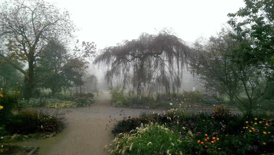 туман осенний парк
