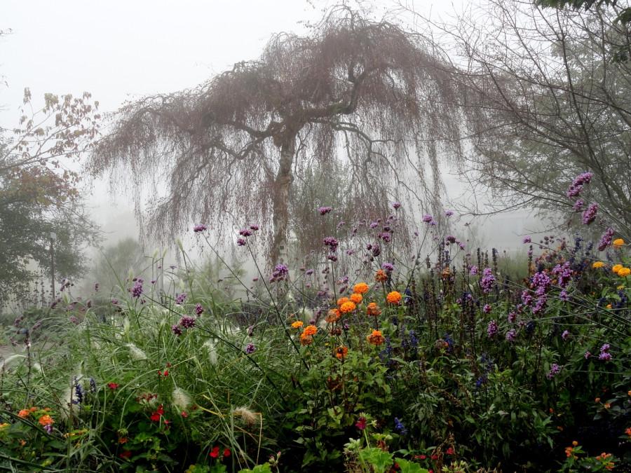 утренний туман осенний парк