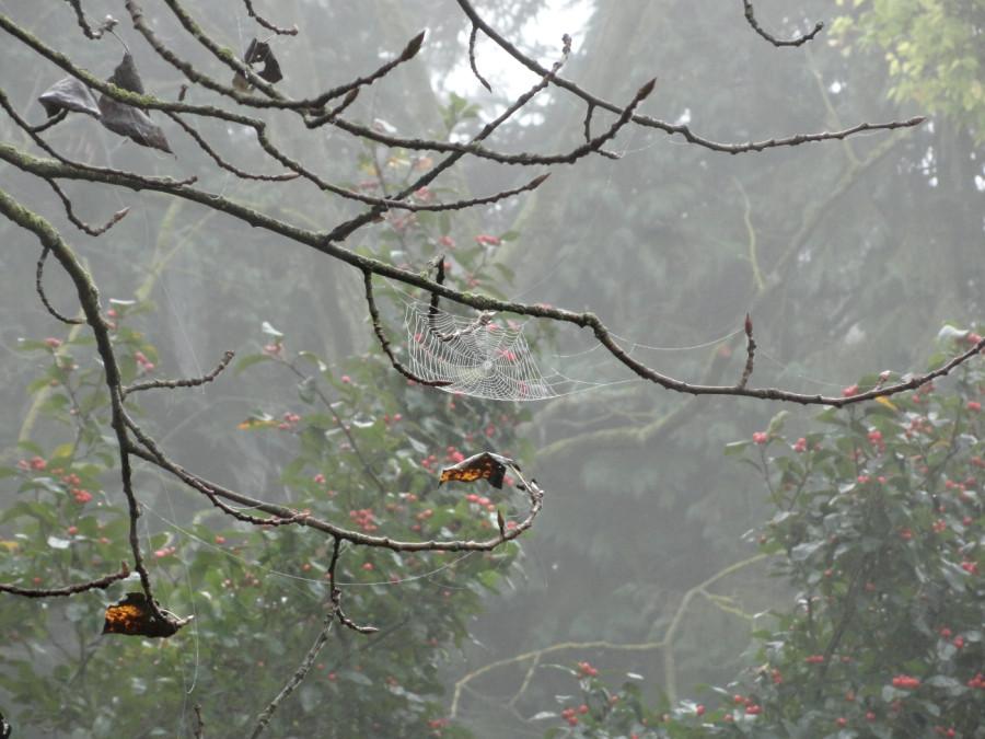 паутинка осень