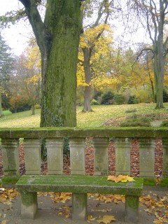 парк осень листья