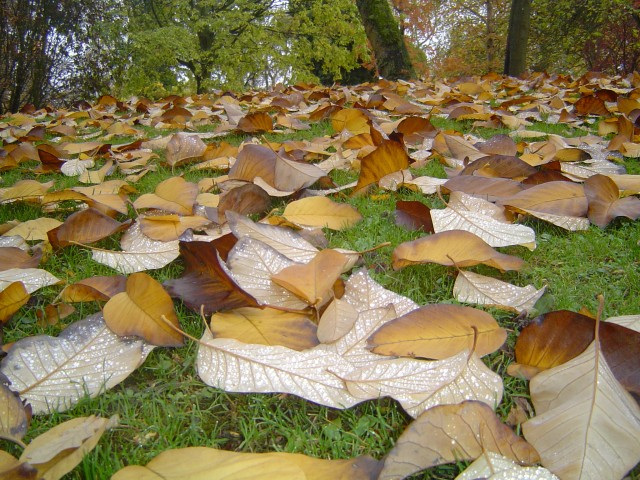 Осенний парк листопад дождь Стихи об осени