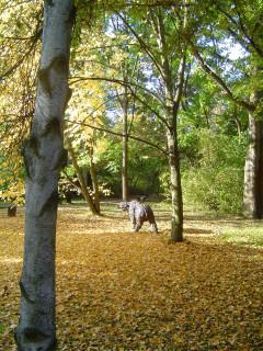 парк осень медведь ненастоящий