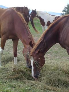 лошади. лошадки. кони пасутся