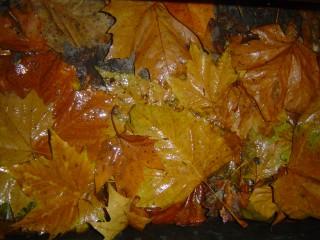 листья на дороге осень листопад