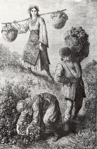 Rose-picking_in_Bulgaria_1870-s