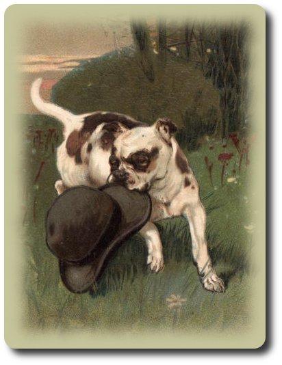 пёс со шляпой ...прошляпить