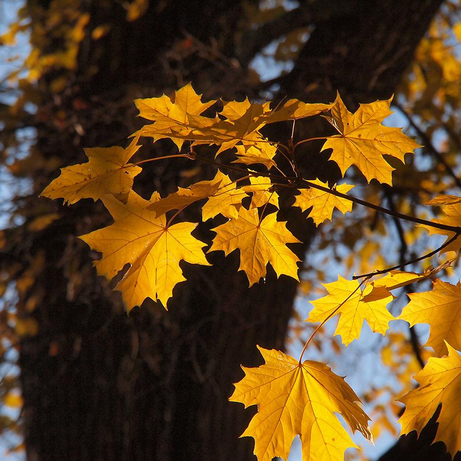 золотая осень в Питере