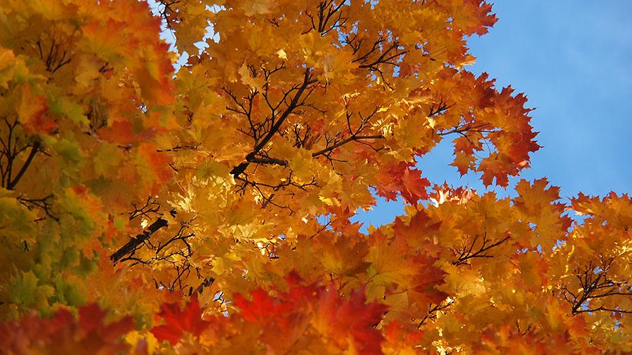в Питере золотая осень