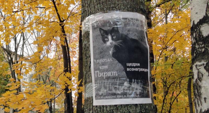 кот пропал, надеюсь найдется...