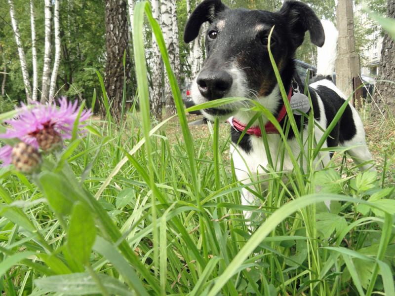 Собакус фотомоделькус