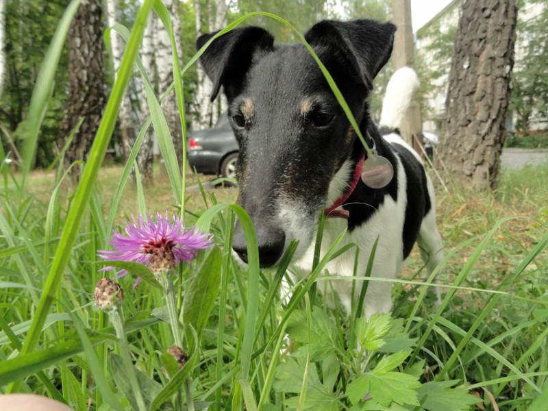Собакус цветочкоувидакус