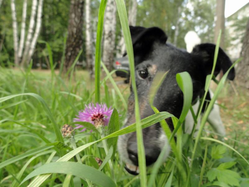 Собакус любопытикус