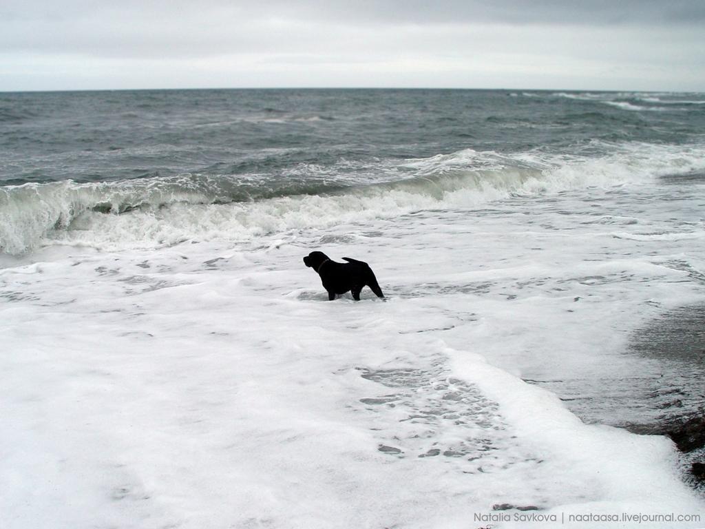 аватарки моря:
