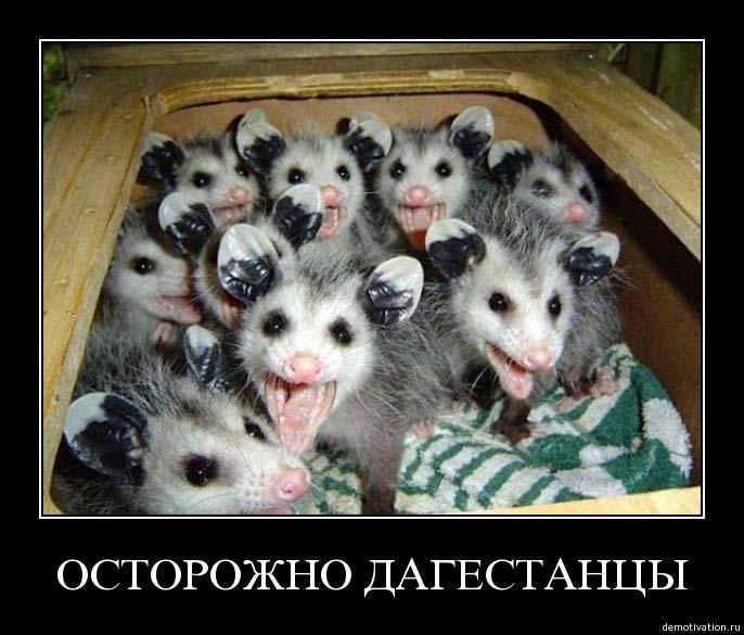 """""""Демократы"""" от оппозиции призывают """"динамить дагестанцев"""". Избранные места из переписки членов КС"""