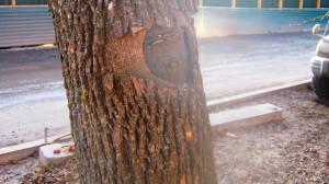 дерева 008