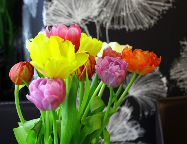 др тюльпаны
