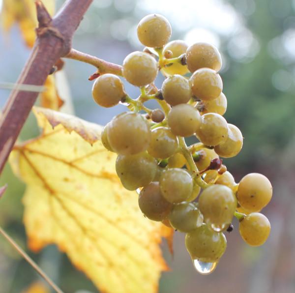 дачо осень 2012 275