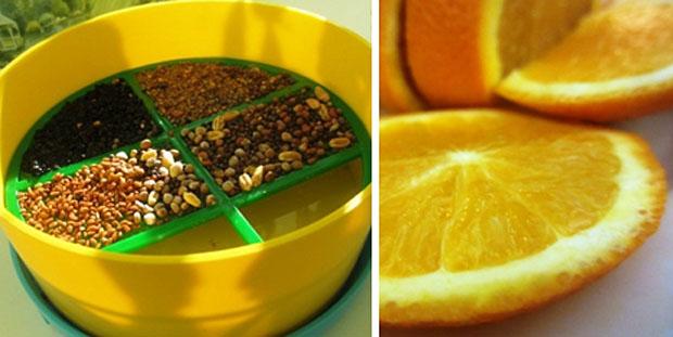 Не хватает витаминов? Выращивайте зелень и покупайте апельсины! =)