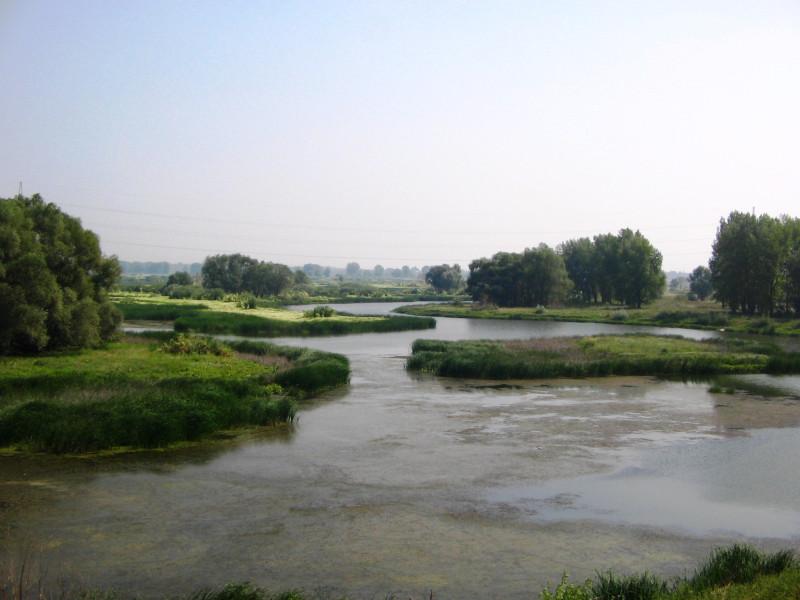 И вот те самые затоны или протоки Волги  — 15 августа 2010 13:28