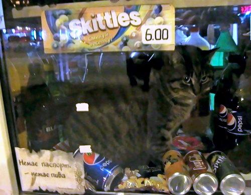 Кошка в витрине.jpeg
