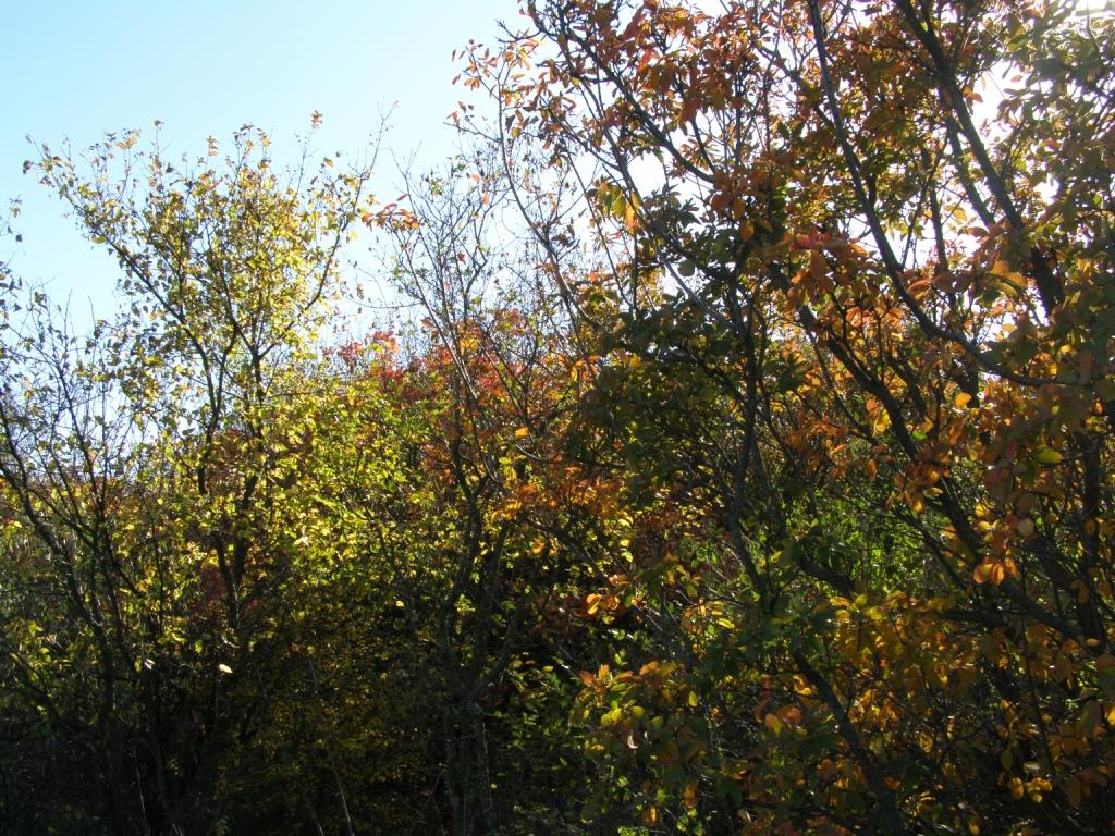 Загадочный лес