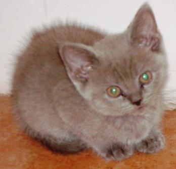 фотка кота маленького получше сжатое