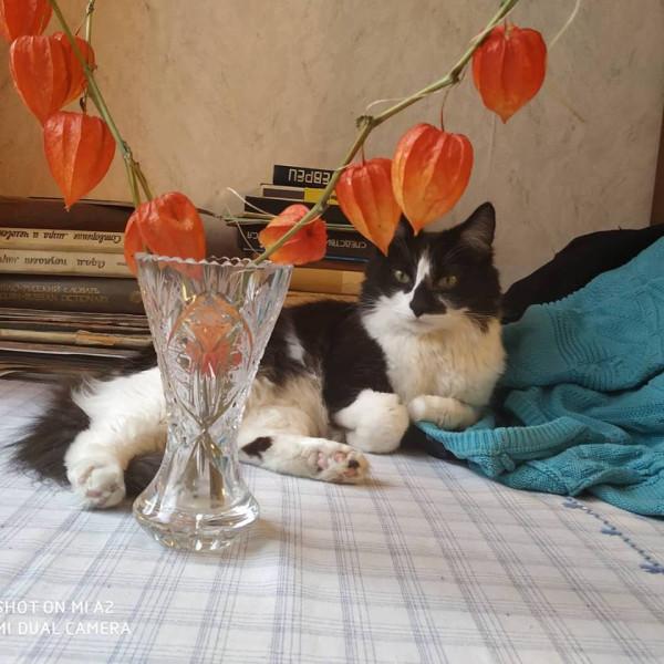 Коты у бабушки 4