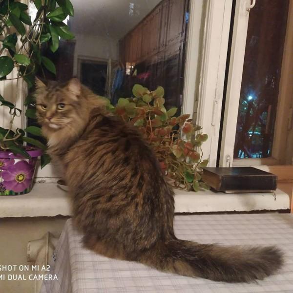Коты у бабушки 6