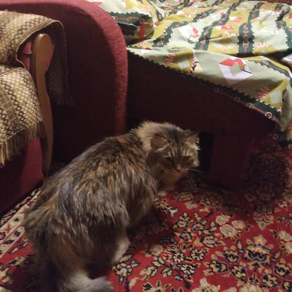 Коты у бабушки 7