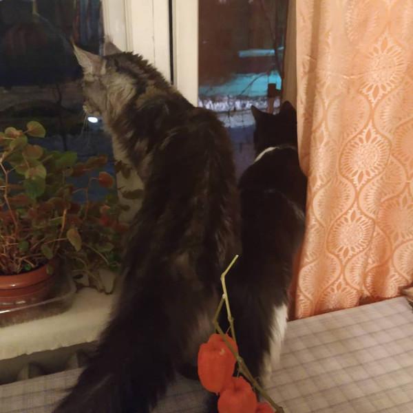 Коты у бабушки 8