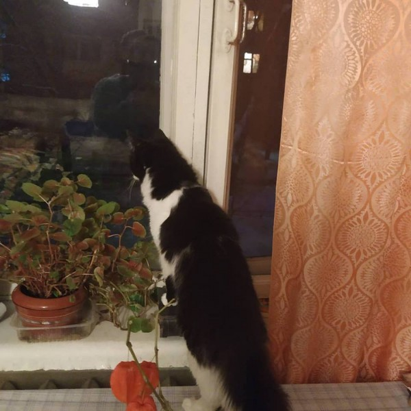 Коты у бабушки 9
