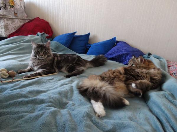 Два кота1